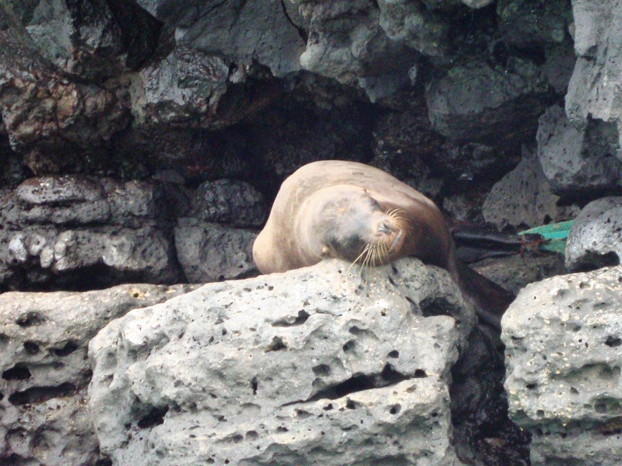 Thumbnail Galapagos locatie