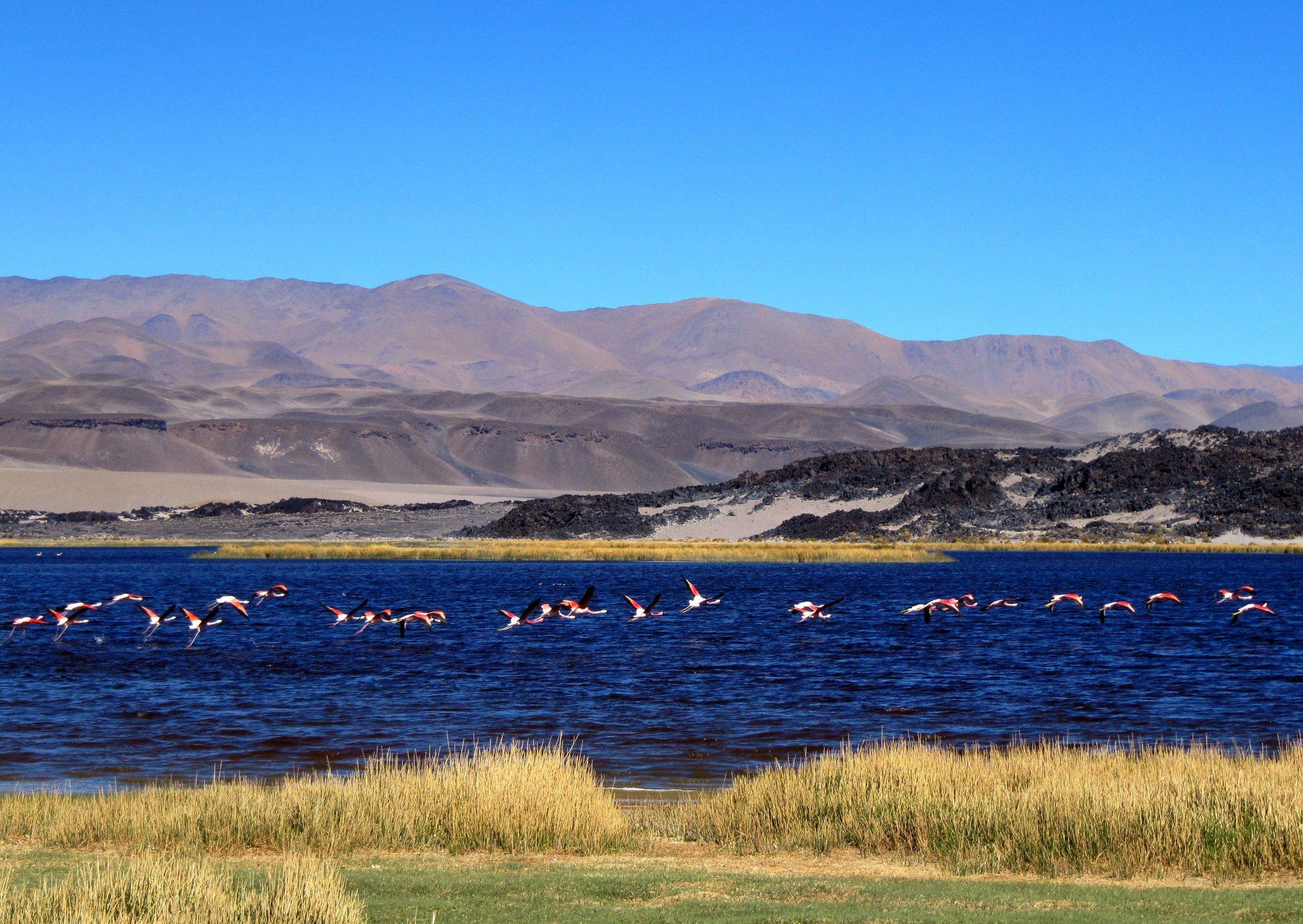 Thumbnail Voorbeeldreizen Argentinië Puna - Argentinië