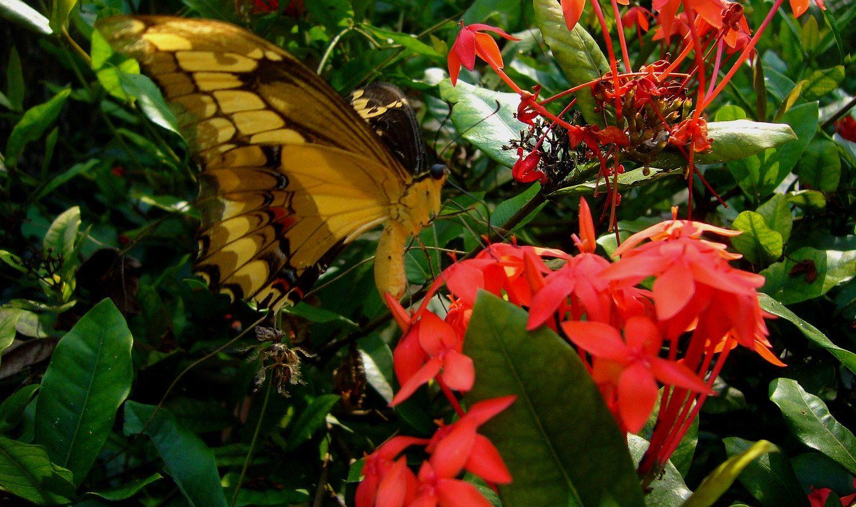 Thumbnail reisverhalen e1504171946484 - Belize