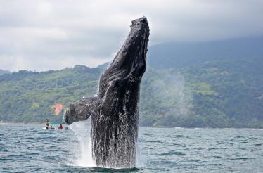 marino ballena np