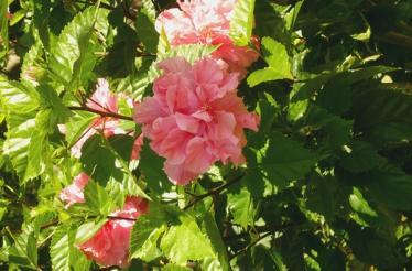 ruta de las flores el salvador