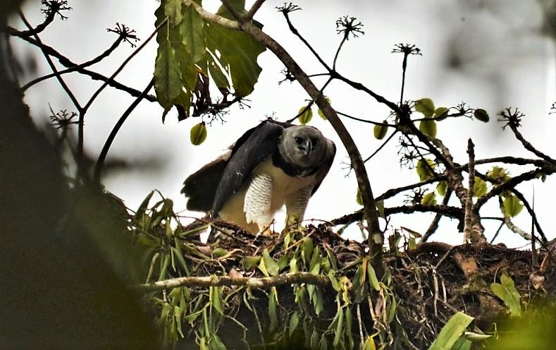 Reisverhalen Panama Natuur Authentiek