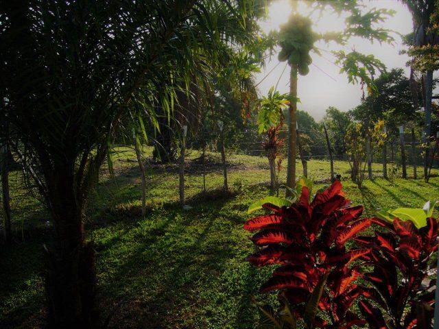 Thumbnail Panama Natuurreis Lut Vivijs Jan Vanhees