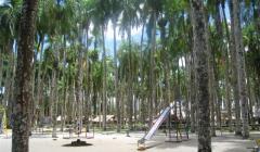 dagen puur natuur in suriname en zuidoos brazilie