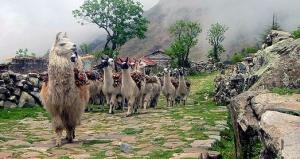 Prachtige natuurreis door Bolivia El Choro