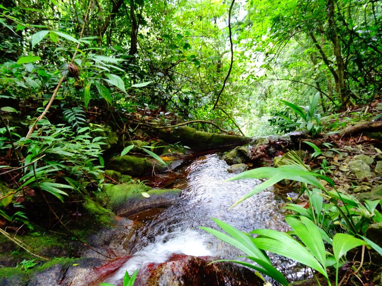 Ontdek authentiek Guatemala Jungle Hike