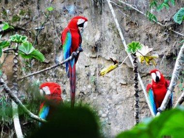 Prachtige natuurreis Bolivia Chalalan