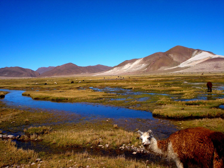 Prachtige natuurreis Salar de Uyuni