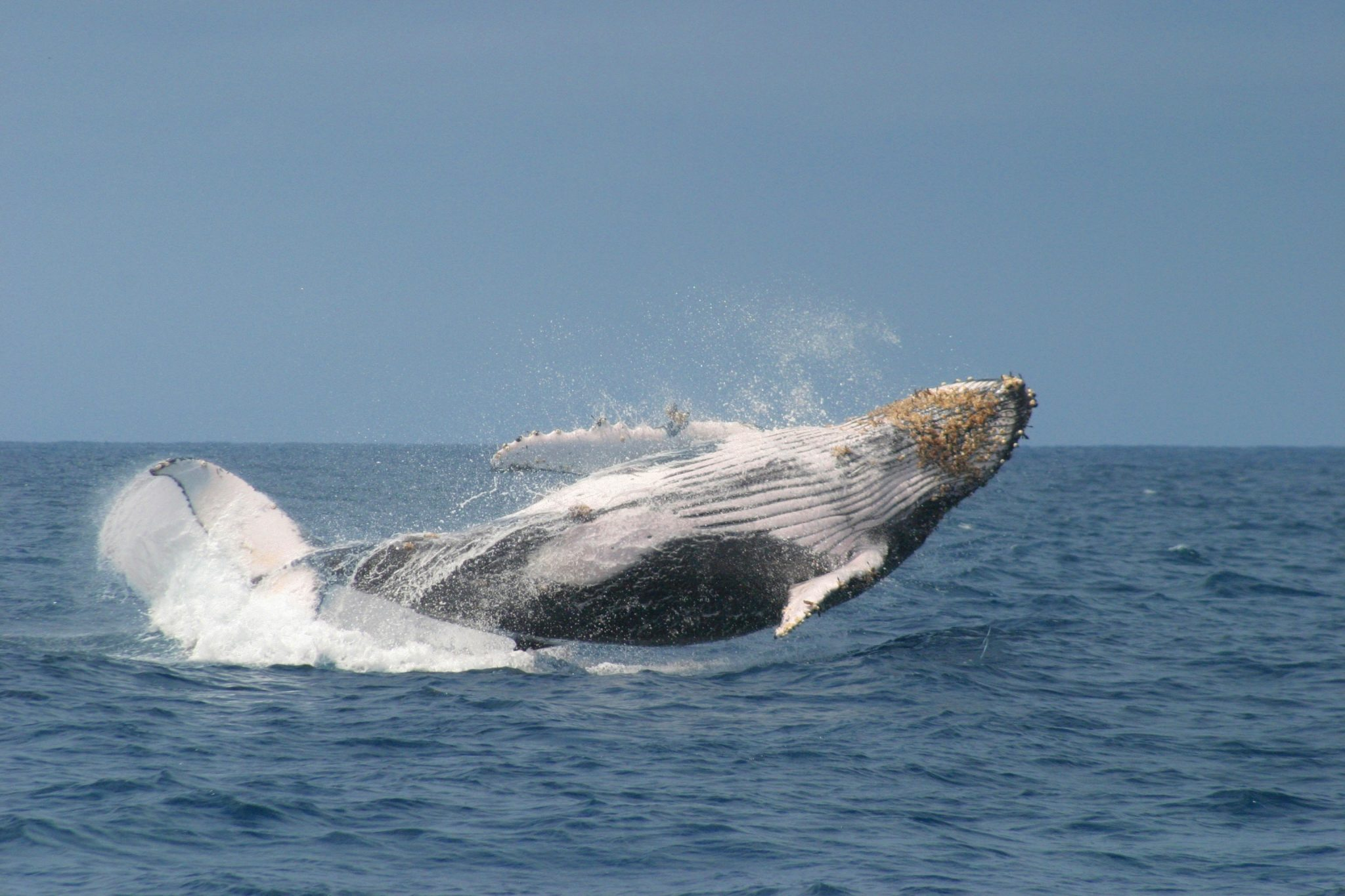 Puerto Lopez whale watching