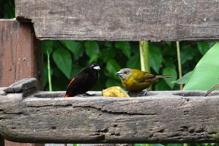 Olaf Reizen Costa Rica reisverhalen